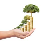 Tree growing from coins Royalty Free Stock Photo