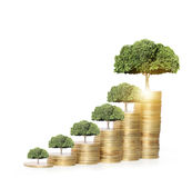 Tree growing from coins Stock Photos