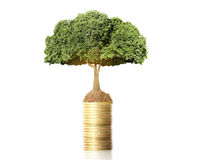 Tree growing from coins Royalty Free Stock Photography