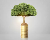 Tree growing from coins Stock Photography