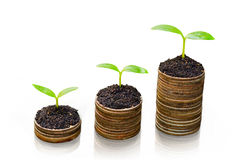 Tree growing on coins. / csr / sustainable development / economic growth / trees growing on stack of coins Stock Image
