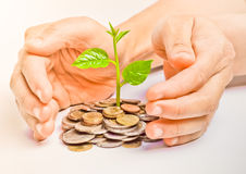 Tree growing on coins. Hand holding tree growing on coins / csr / sustainable development / economic growth / trees growing on stack of coins Stock Photography