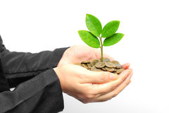 Tree growing on coins Royalty Free Stock Images