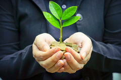 Tree growing on coins. Hand holding tree growing on coins / csr / sustainable development / economic growth / trees growing on stack of coins Stock Image
