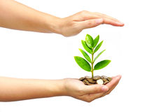 Tree growing on coins Royalty Free Stock Photography