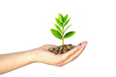 Tree growing on coins. Hand holding tree growing on coins / csr / sustainable development / economic growth / trees growing on stack of coins Royalty Free Stock Photo