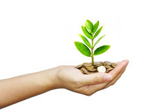 Tree growing on coins. Hand holding tree growing on coins / csr / sustainable development / economic growth / trees growing on stack of coins Royalty Free Stock Images