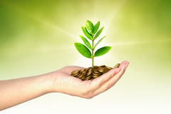 Tree growing on coins. Hand holding tree growing on coins / csr / sustainable development / economic growth / trees growing on stack of coins Royalty Free Stock Photos