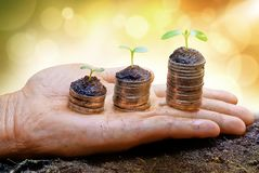 Tree growing on coins. Hand holding treee growing on coins / csr / sustainable development / economic growth / trees growing on stack of coins Royalty Free Stock Photos