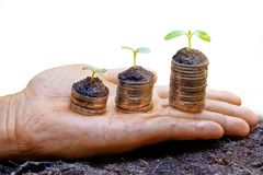 Tree growing on coins. Hand holding treee growing on coins / csr / sustainable development / economic growth / trees growing on stack of coins Royalty Free Stock Photo