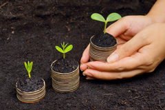 Tree growing on coins Stock Photos
