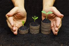 Tree growing on coins. Hands holding trees growing on coins / csr / sustainable development / economic growth / trees growing on stack of coins Stock Image