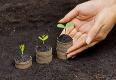 Tree growing on coins. Hands holding trees growing on coins / csr / sustainable development / economic growth / trees growing on stack of coins Stock Photos