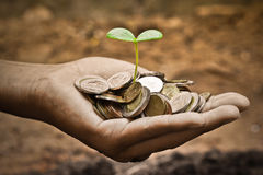 Tree growing on coins. Hands holding a young plant growing on coins / planting tree Stock Images