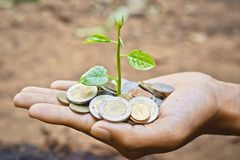 Tree growing on coins. Hands holding a young plant growing on coins / planting tree Royalty Free Stock Images