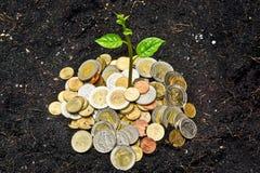 Tree growing on coins. A tree growing on coins / save the world royalty free stock photo