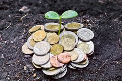 Tree growing on coins. A small tree growing on coins royalty free stock photos