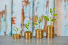 Tree growing on coins stack ,concept of investment. Growth stock photography
