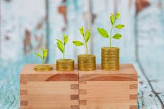 Tree growing on coins stack ,concept of investment. Growth stock photo