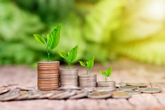 Tree growing on coins stack with sunray. For saving money concept royalty free stock photo