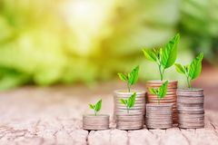 Tree growing on coins stack with sunray. For saving money concept stock images