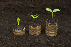 Tree growing on coins. Trees growing on coins / csr / sustainable development / economic growth / trees growing on stack of coins Royalty Free Stock Photo