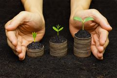 Tree growing on coins. Trees growing on coins / csr / sustainable development / economic growth / trees growing on stack of coins Royalty Free Stock Photos