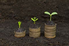 Tree growing on coins. Trees growing on coins / csr / sustainable development / economic growth / trees growing on stack of coins Royalty Free Stock Image