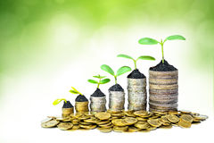 Tree growing on coins Royalty Free Stock Image