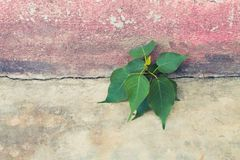 Tree growing in concrete Stock Photo
