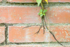 Tree growing on concrete wall Stock Photos