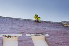 Tree growing on concrete wall Stock Images