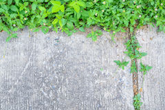 Tree growing on the crack concrete floor Stock Photo