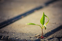 Tree growing through crack in pavement Stock Image