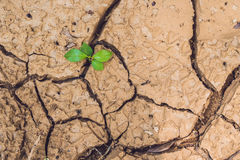 Tree growing on cracked earth. growing tree save. the world environmental problems. cut tree. Stock Image