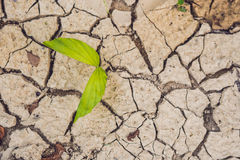Tree growing on cracked earth. growing tree save. the world environmental problems. cut tree. Royalty Free Stock Images