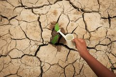 A tree growing on cracked ground. Crack dried soil in drought, Affected of global warming made climate change. Water shortage. Stock Images