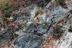 Tree growing in the crevice of a rock. Close-up Stock Photo