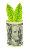 Tree growing from dollar bill Royalty Free Stock Photos