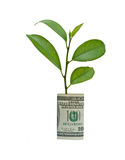 Tree growing from dollar bill Royalty Free Stock Photography
