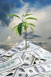 Tree growing dollar soil against the sky Royalty Free Stock Photo