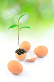 Tree growing in egg Royalty Free Stock Photo