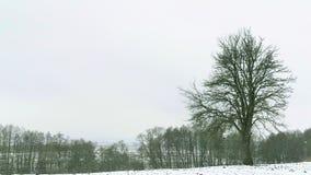 Tree growing in a field. Winter. Tree growing in a field. Winter season stock video footage