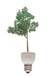 Tree growing from  fluorescent lamp Stock Photos
