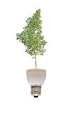 Tree growing from fluorescent lamp Royalty Free Stock Images