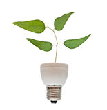 Tree growing from  fluorescent lamp Stock Photo