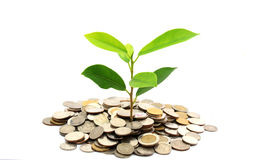 Tree Growing From Coins Royalty Free Stock Images
