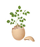 Tree Growing From Egg Royalty Free Stock Image