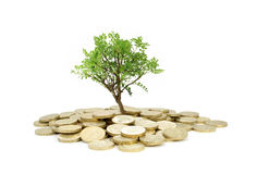 Tree Growing From Money Stock Images