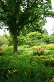 Tree growing in garden. A view of a lovely green tree growing in a lush country flower garden Stock Photo